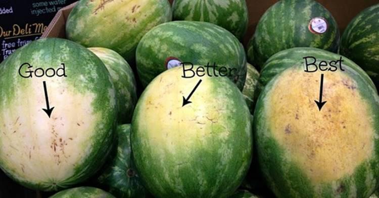 Como escolher uma melancia: 5 dicas para você nunca mais comprar melancias aguadas!
