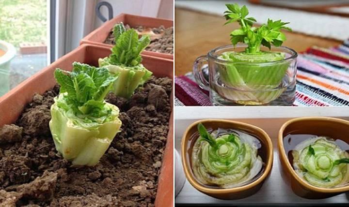 10 Vegetais que podem facilmente ser cultivados em casa em qualquer altura do ano
